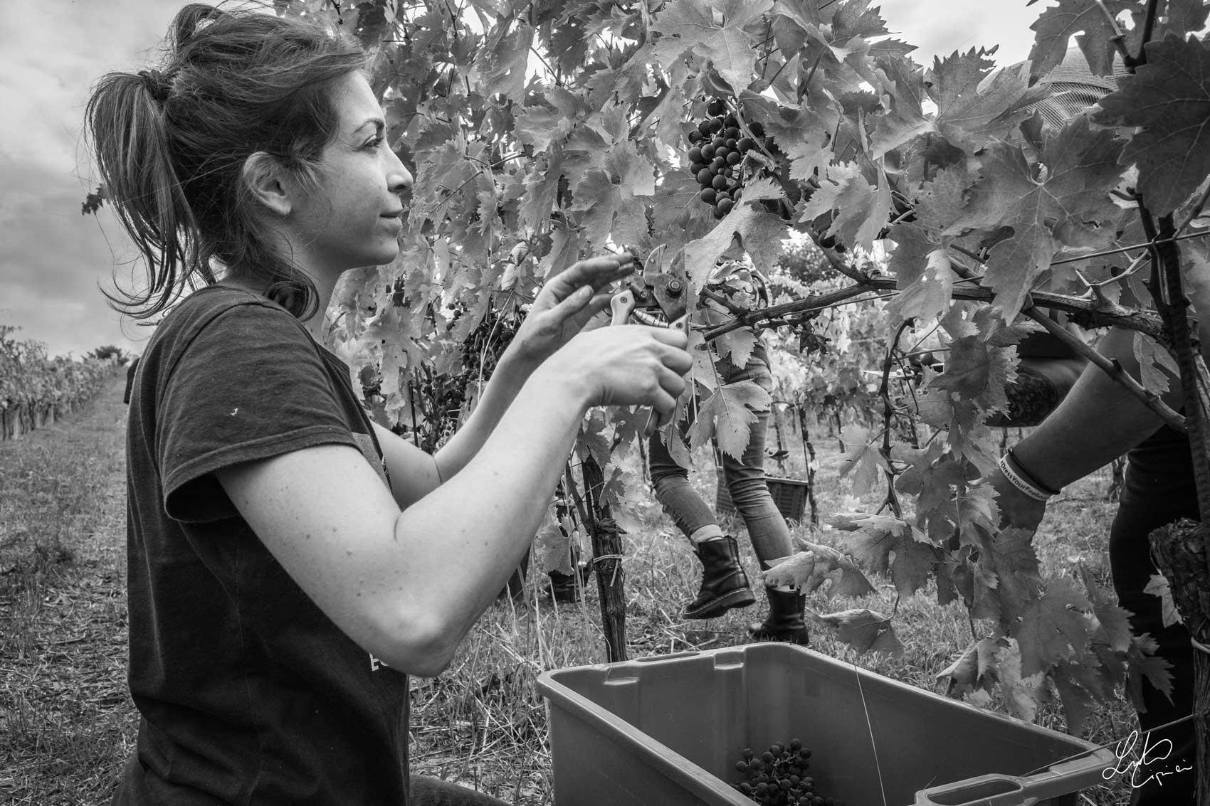 Eleonora raccoglie uva